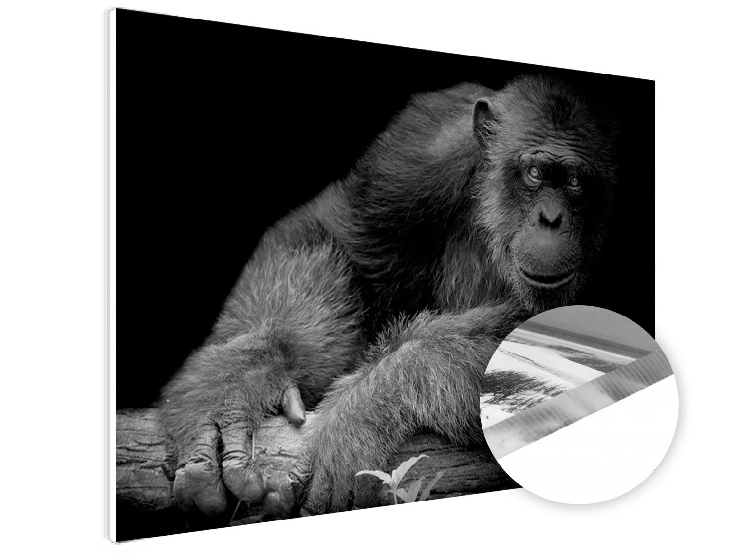wanddecoratie-Plexiglas-foto